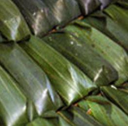 Leaves & Hojas